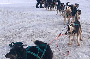Собаки Берингии